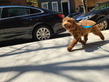 WInston-Happy-Puppy-BarkSupport.jpg
