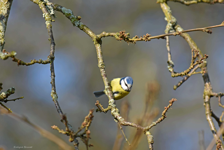 oiseaux 12