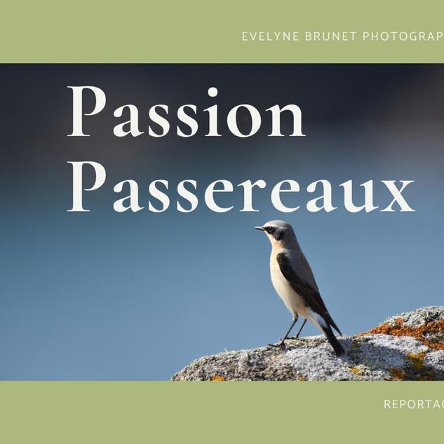 """""""Passion passereaux"""""""