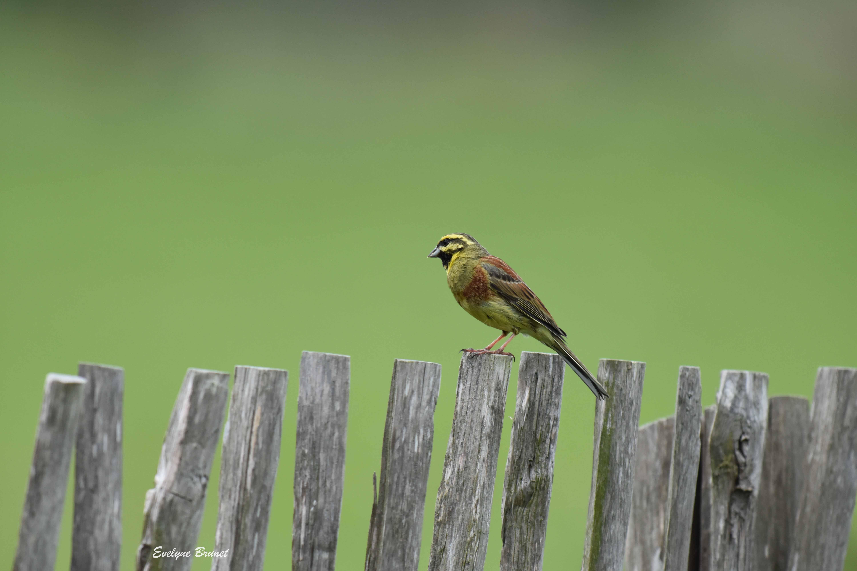 oiseaux 24