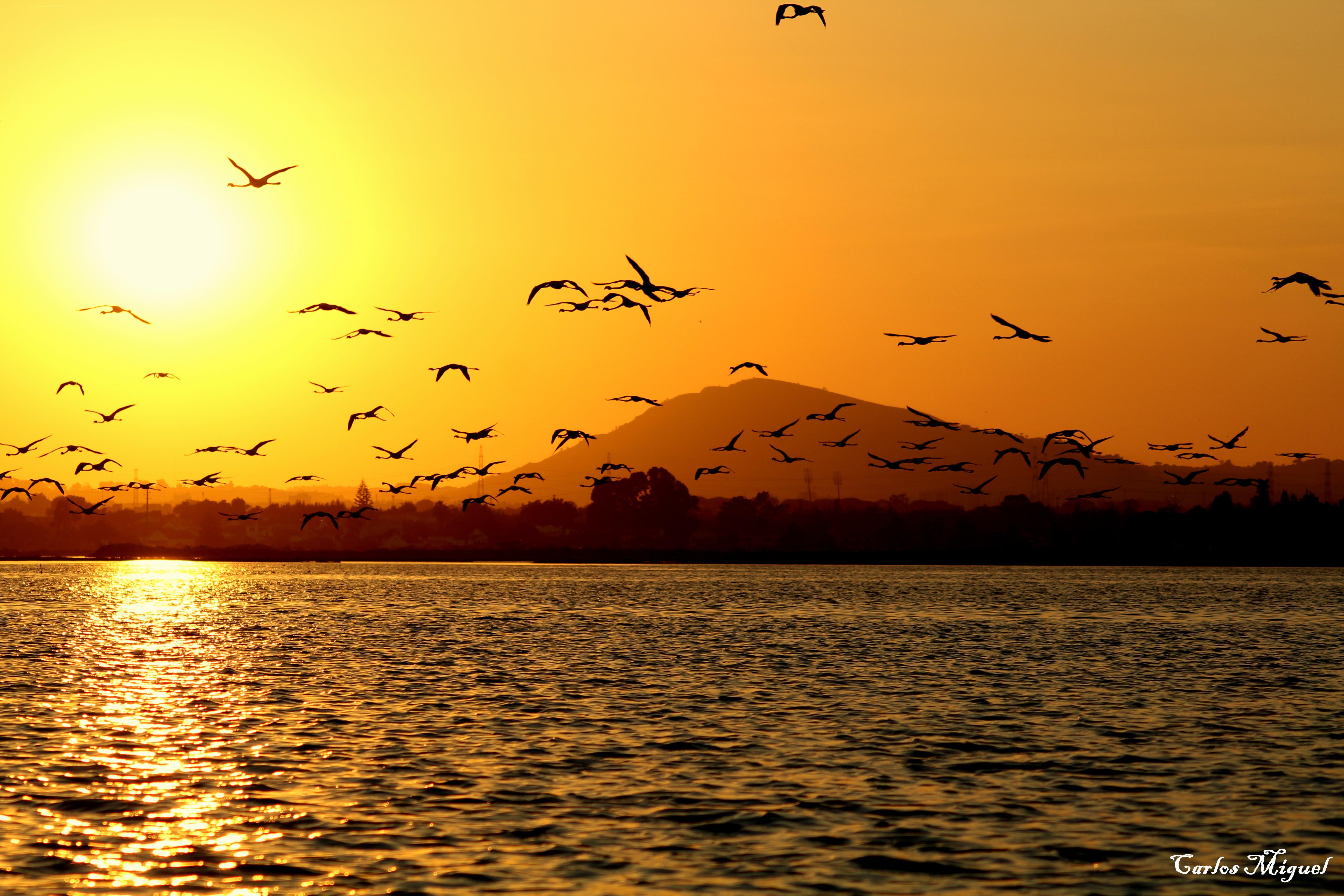 Pôr do sol / Sunset