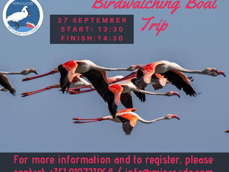 Birdwatching Boat Trip- 27 September 2019