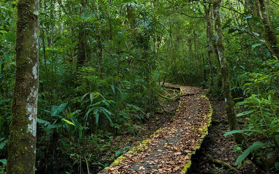 selva-lacandona-1024x640.jpg