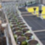 container conveyor, Single filing conveyor, aluminum can single filing, waterfall single filer