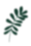branche.png
