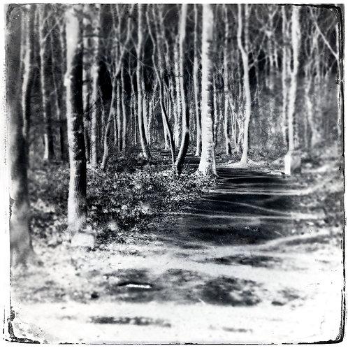 A Walk Through the Woods, 16th June 2020