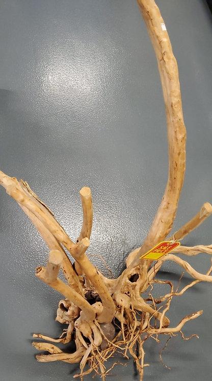 Rainforest Wood Root..