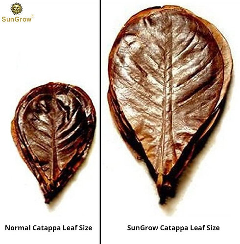 Sungrow Catappa Leaves