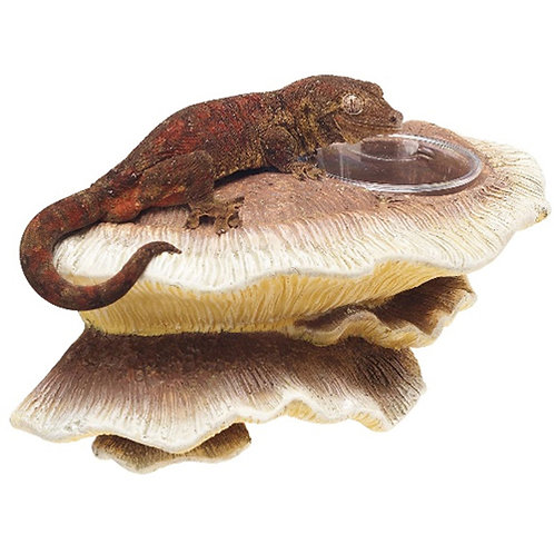 Zilla Decor Vertical Mushroom Feeding Ledge