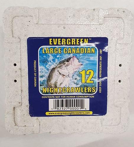 Evergreen Large Nightcrawlers x 12