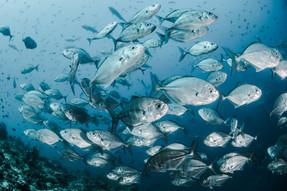 รายงานใหม่เผย สวัสดิภาพสัตว์น้ำคือกุญแจสู่การบรรลุเป้าหมายการพัฒนาที่ยั่งยืน