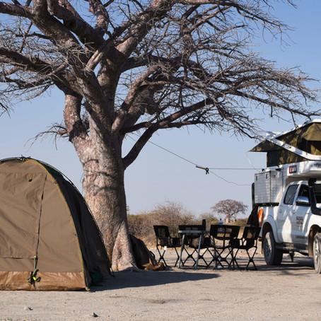 Suivre des zoologistes dans la savane pour une aventure inoubliable