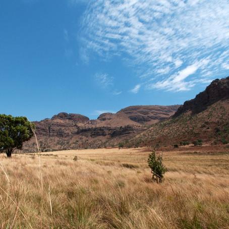 Le Parc National Pilanesberg en Afrique du Sud