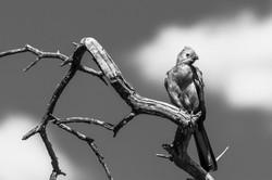 12H04 Go Away Bird