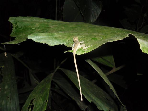 Fauna Tambopata 5.JPG