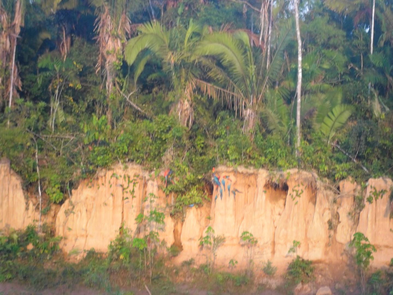 Collpa GUacamayos 1.JPG