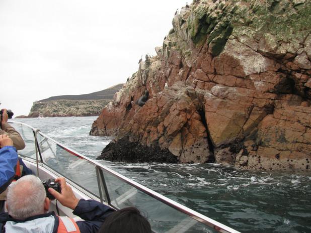 Islas Ballestas - Paracas 3.JPG