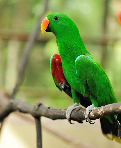 parrot-bird-PNPR62S_edited.jpg