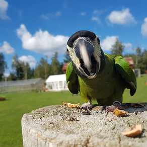 "How to prevent resource guarding and ""sudden biting"" in parrots"