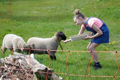 Kinder & Schafe (2).JPG