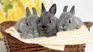 Easter Pet Treats