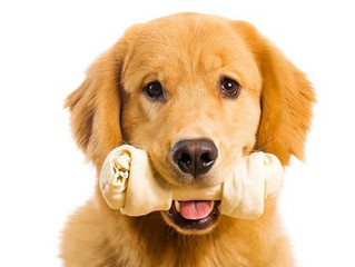 Rawhide Dog Treats Recalled in US