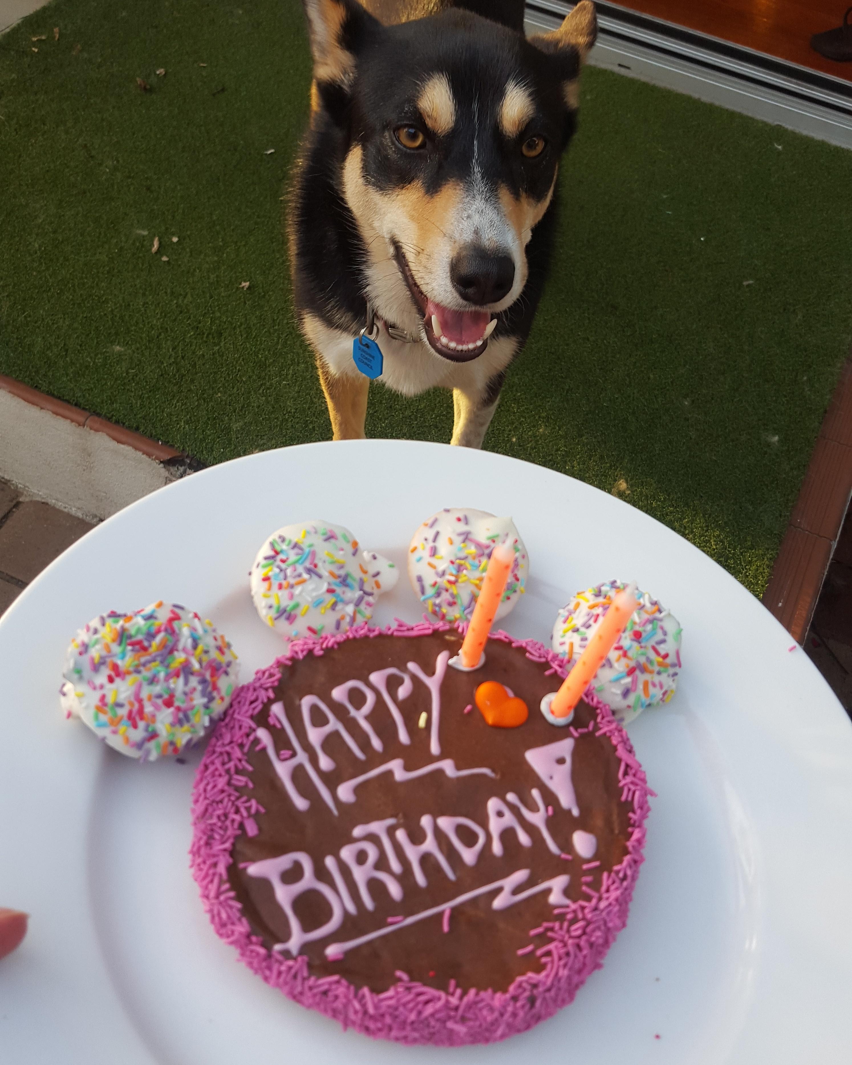 CAROB DOGGY BIRTHDAY CAKE DOG TREAT