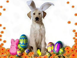 Easter Pet Treats with Active Pet Products