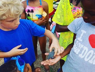 FISH 'N FINS INTRODUCES - 'SCHOOLS TO THE SEA'