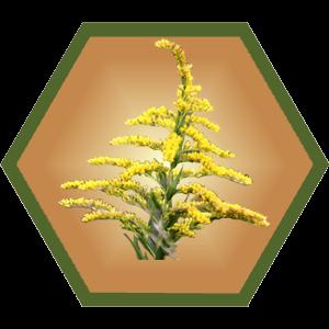 Goldenrod Honey - 3 oz Hex Jar