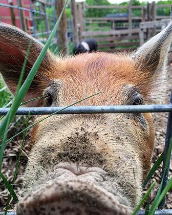 Pasture-raised PIG - HALF (deposit)