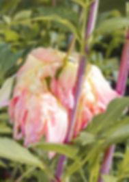 Frijke Coumans   Gardeners of Desire