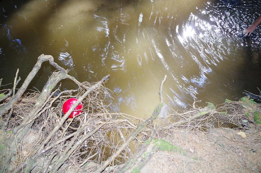 Frijke Coumans | Roses aren't red, violence is blue