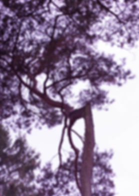 Frijke Coumans | Try purple without blue