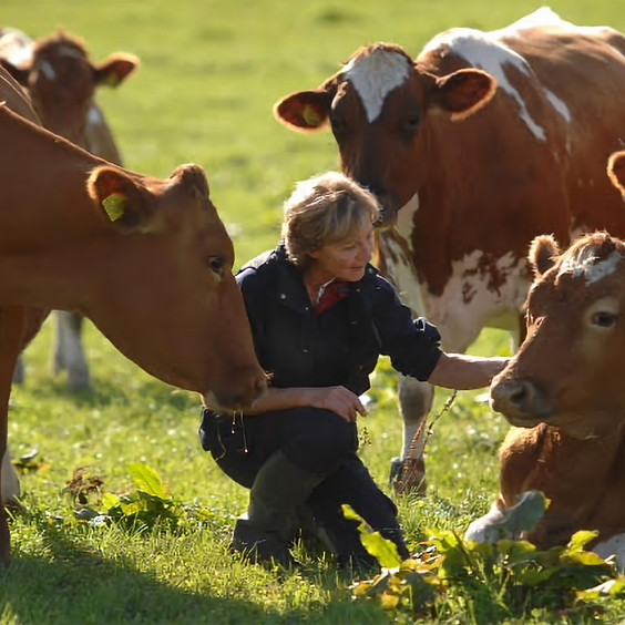 Homeopathy for livestock coughs