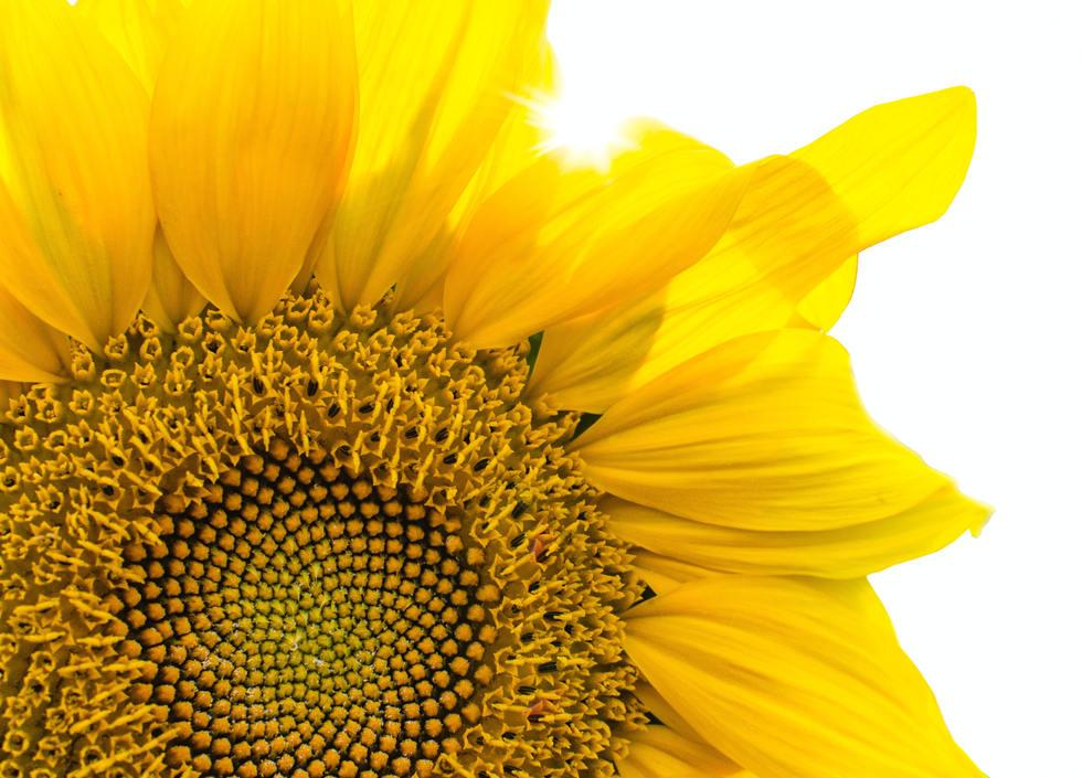 beautiful-blooming-blossom-botanical-293