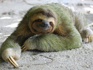 Slothy can be good (but not at the DMV)