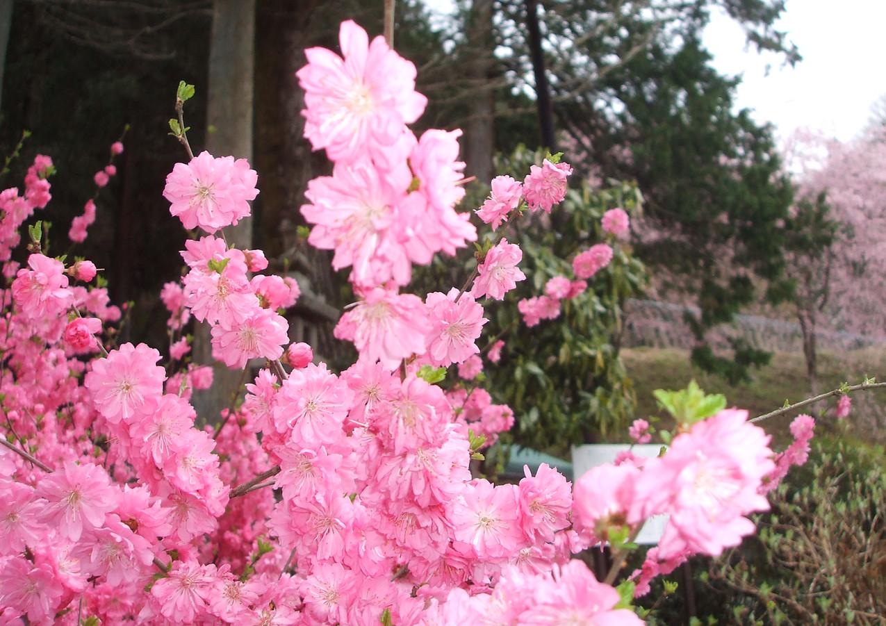 春の色どり