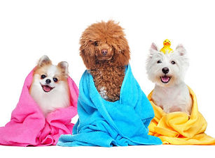 Grooming Services for Your Pet