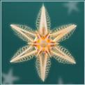 Stern-202.jpg