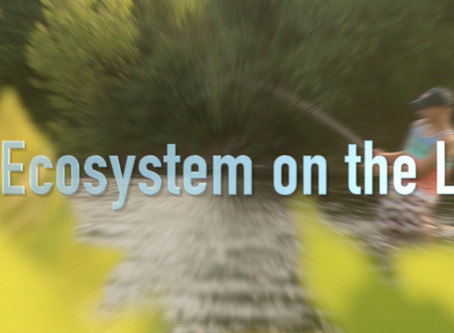 An Ecosystem on the Line