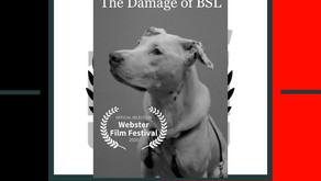 The Damage of BSL