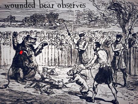 A Wounded Bear Observes