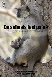 Do Animals Feel Pain.jpg