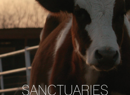 Sanctuaries: A New Life