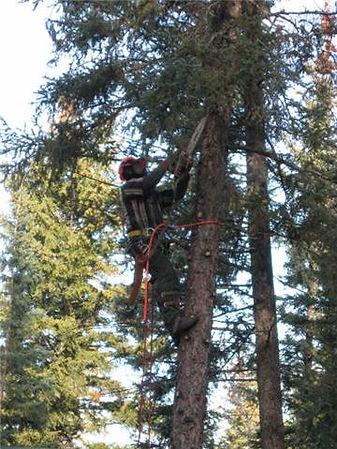 Bednesti Tree Services Prince George Bc Certified Arborist
