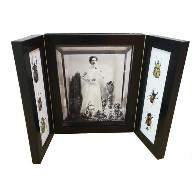 The Entomologists Cabinet