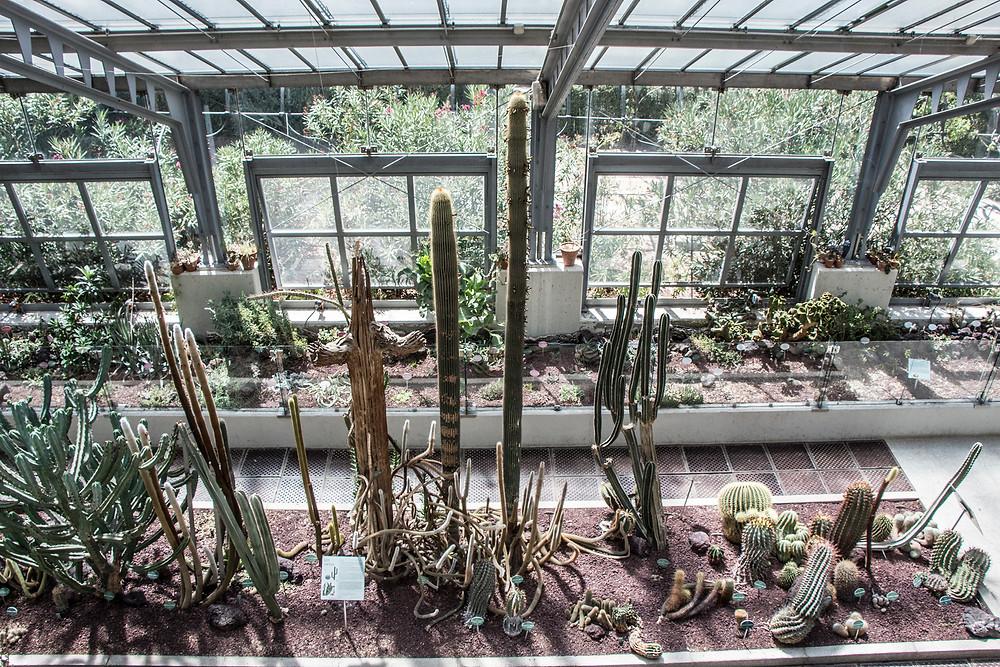 Botanical Garden Madrid