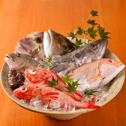 本日の旬魚