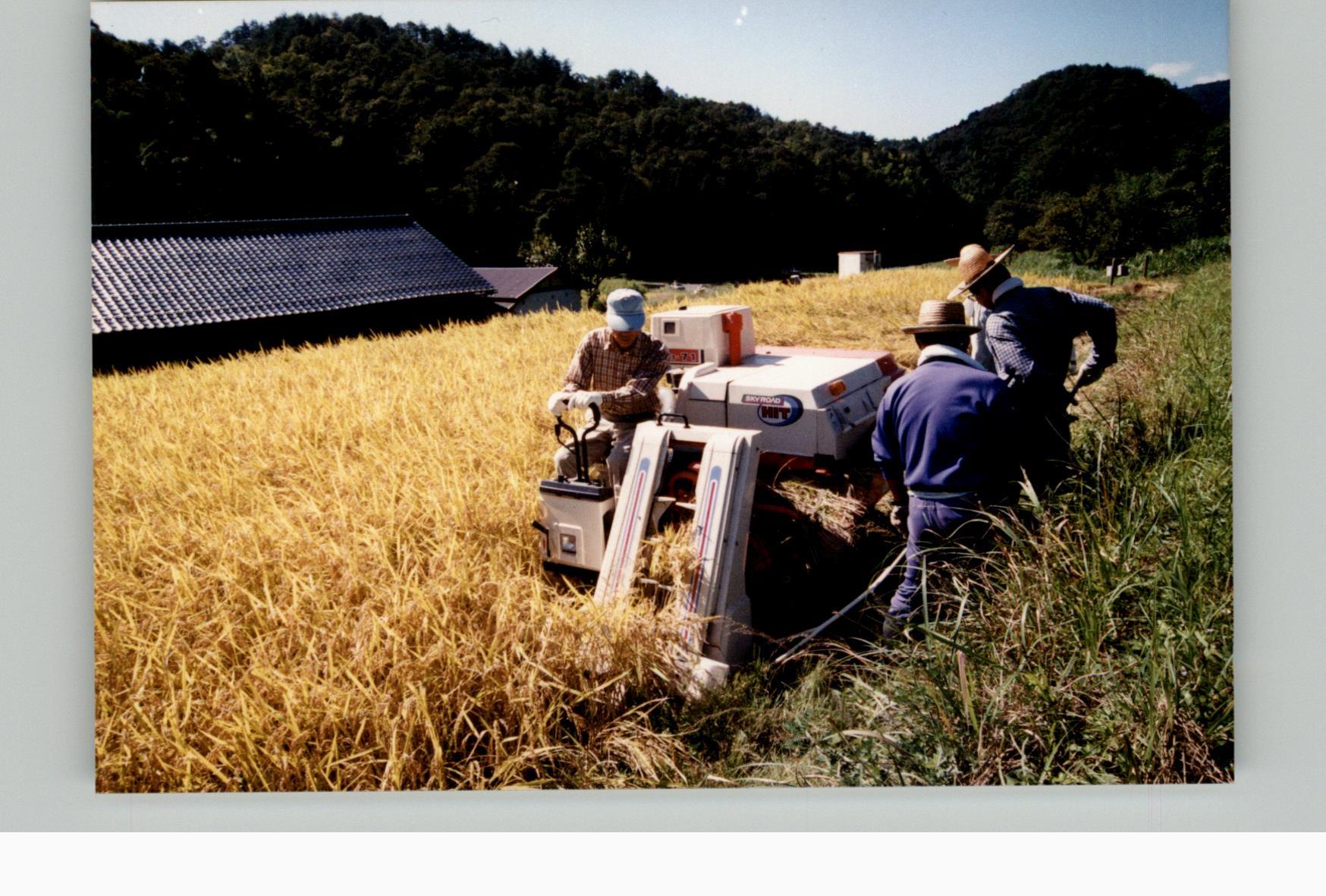 棚田オーナー稲刈り20010923d